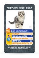 Козырные карты. Кошки — фото, картинка — 1