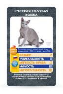 Козырные карты. Кошки — фото, картинка — 2