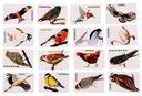 Учимся запоминать. Птицы — фото, картинка — 3